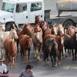 shaniatwain_caesarspalace_lasvegasblvd_horses_stlltheone_colosseum_sunofhollywood_06