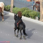 shaniatwain_caesarspalace_lasvegasblvd_horses_stlltheone_colosseum_sunofhollywood_10