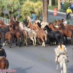 shaniatwain_caesarspalace_lasvegasblvd_horses_stlltheone_colosseum_sunofhollywood_11