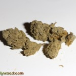 SnoopLion_SnoopDogg_QualityGenetix_420_Presidential_caviar_MasterKush_HoweTwins_03
