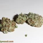 SnoopLion_SnoopDogg_QualityGenetix_420_Presidential_caviar_MasterKush_HoweTwins_04
