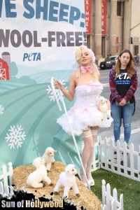 courtney stodden peta sheep sheering hollywood highland garry sun prophecy sunofhollywood 02