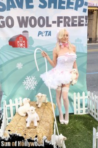 courtney stodden peta sheep sheering hollywood highland garry sun prophecy sunofhollywood 03