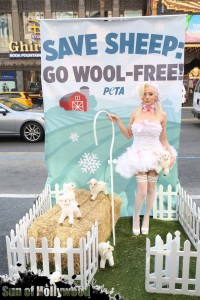 courtney stodden peta sheep sheering hollywood highland garry sun prophecy sunofhollywood 06
