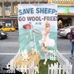 courtney stodden peta sheep sheering hollywood highland garry sun prophecy sunofhollywood 07