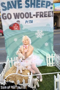courtney stodden peta sheep sheering hollywood highland garry sun prophecy sunofhollywood 16