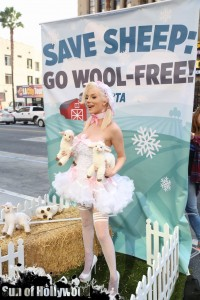courtney stodden peta sheep sheering hollywood highland garry sun prophecy sunofhollywood 23